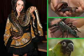 Creature Encounters - Educational Interactive Programs with Animals, Birds, Reptiles, and Insects
